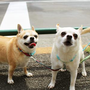 愛犬や愛猫はどうなる? 離婚に際してのペットの所有権問題