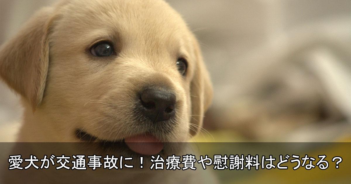 愛犬が交通事故に遭ったら治療費・慰謝料は払ってもらえるの?